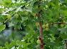 의령가볼만한 곳-의령 세간리 은행나무