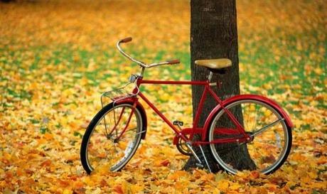 낙엽은가을이 지나는 흔적